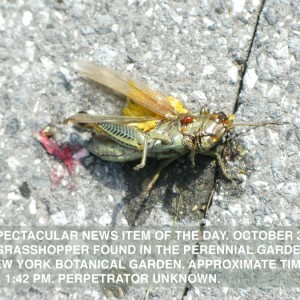 oct3 - artcodex: non spectacular news